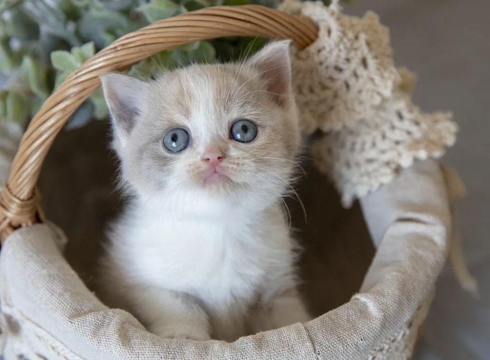 带小奶猫看个病要2000,感觉比人还贵,我是被坑了吗?